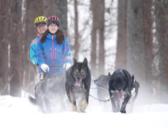 冬季限定!南富良野狗拉雪橇體驗