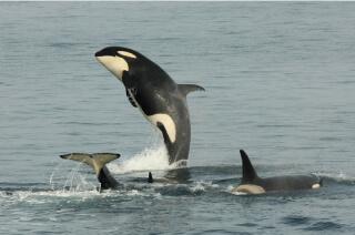 出海賞鯨!北海道知床特色生態之旅