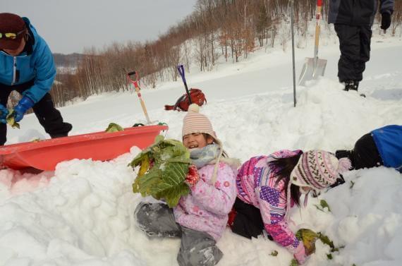 體驗雪藏蔬菜飲食文化!發現越冬馬鈴薯美味的秘訣