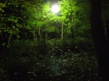 富良野夜間生態私人導覽