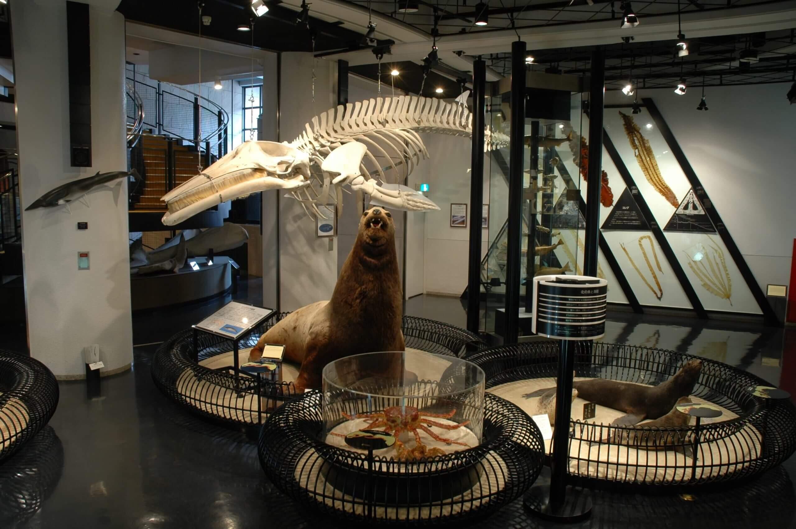集合釧路歷史與自然魅力的「釧路市博物館」