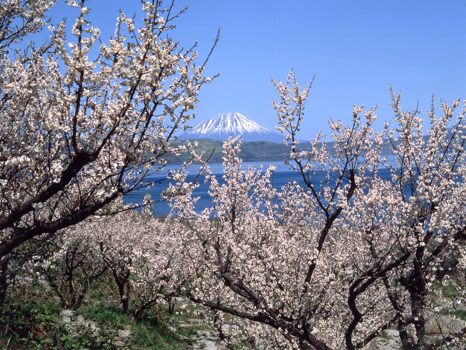 羊蹄山:蝦夷富士