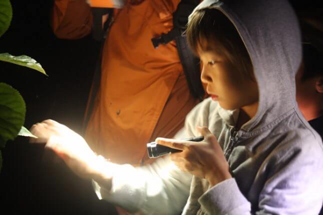 夜間生態探索之旅