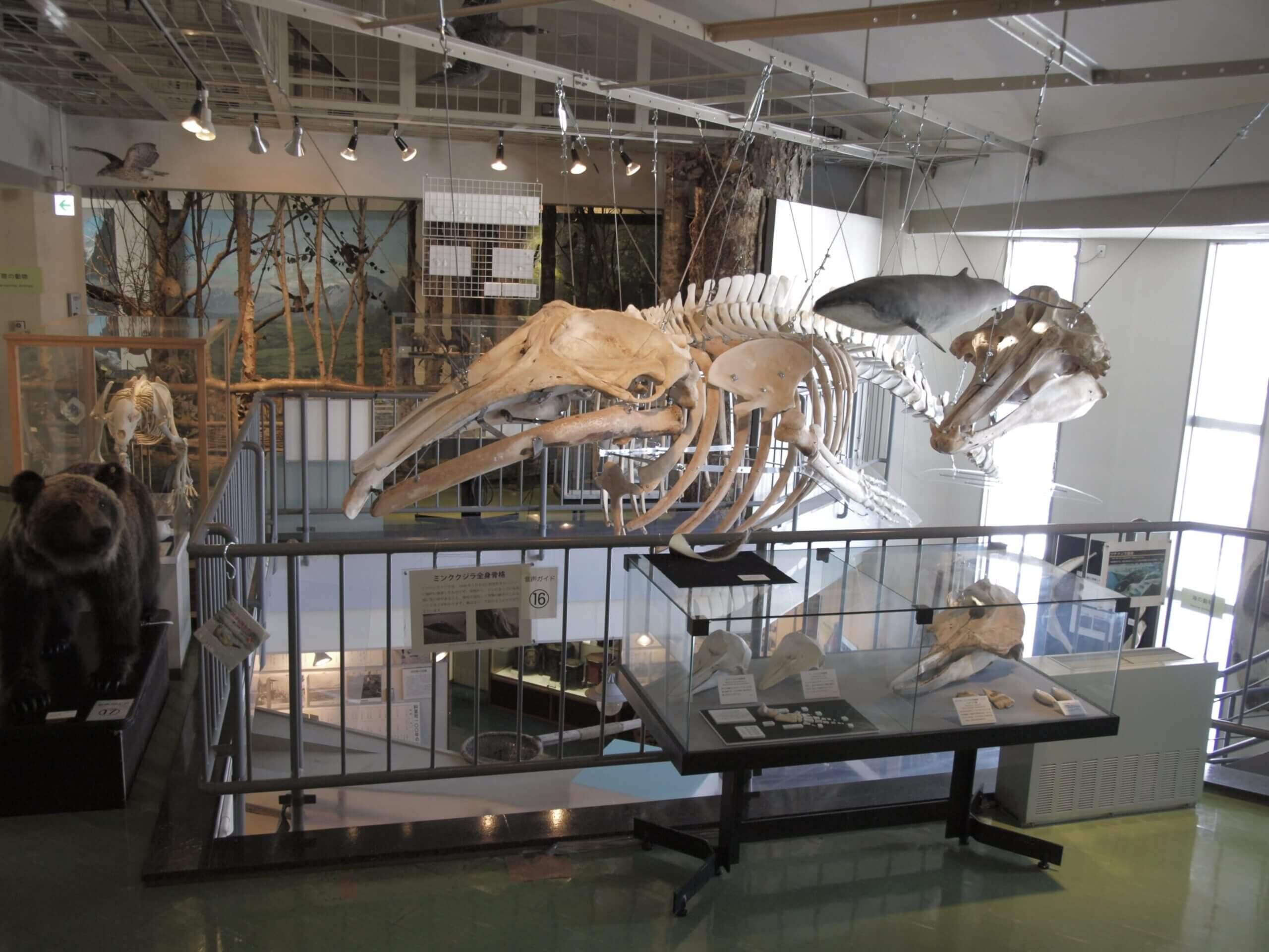 斜里町立知床博物館:自然與歷史文化的綜合展示