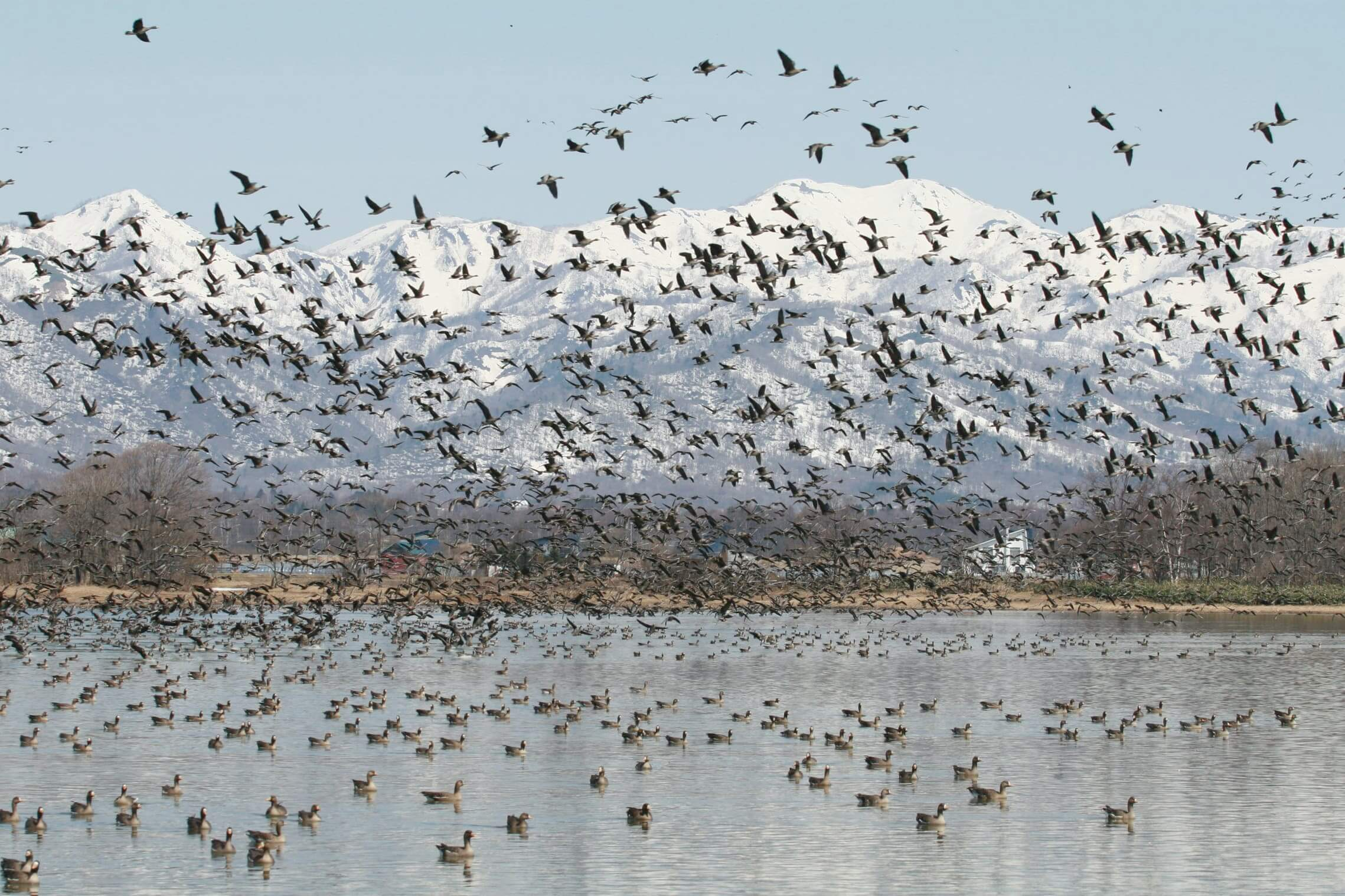日本國內最北部最大的水鳥寄居地:宮島沼
