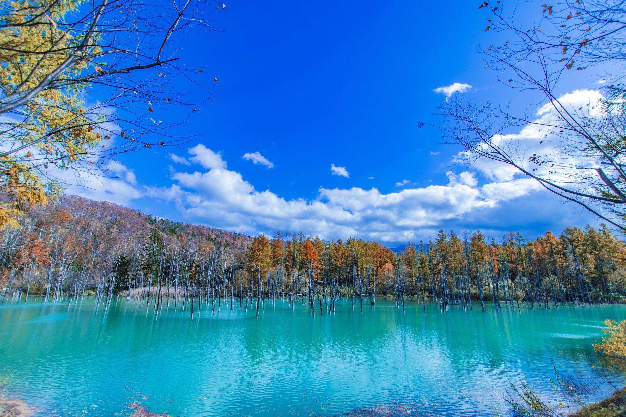 魅惑的人造湖「青池」