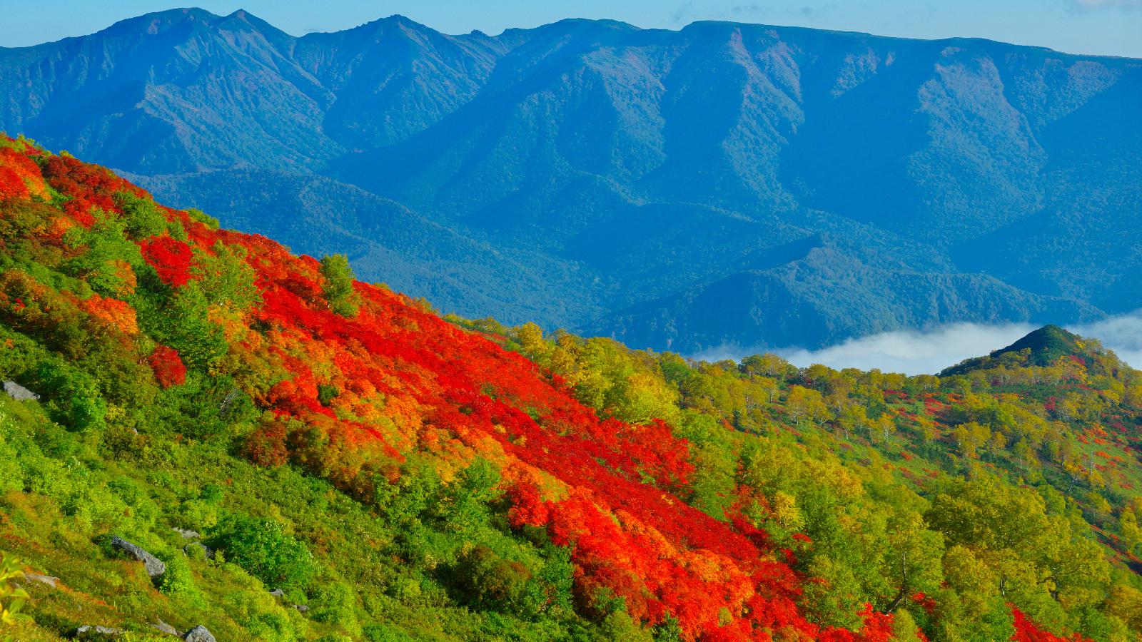 全日本最早可以看到紅葉的地區「赤岳銀泉台」