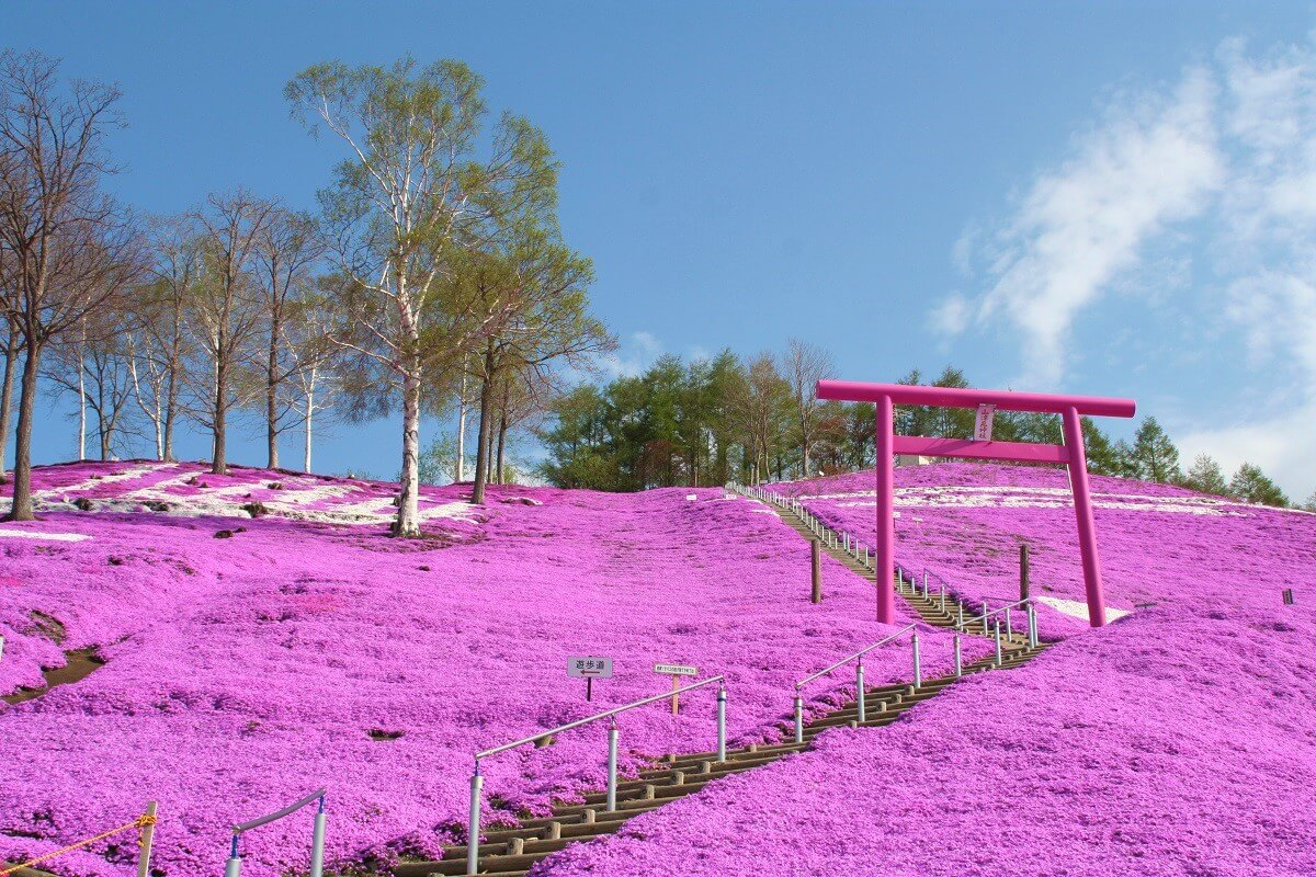 超人氣粉紅色鳥居「東藻琴芝櫻公園」