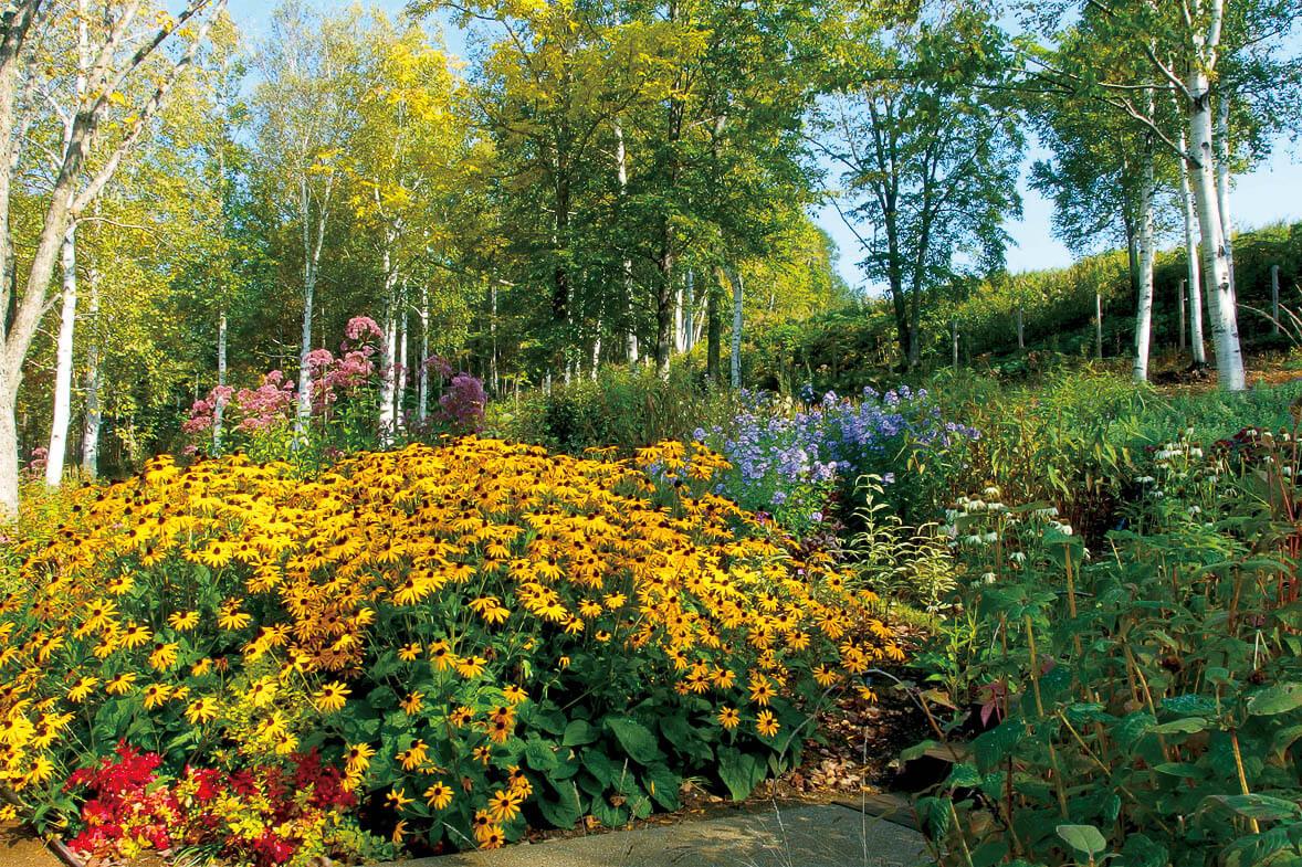 充分享受北海道的大自然:大雪森林花園