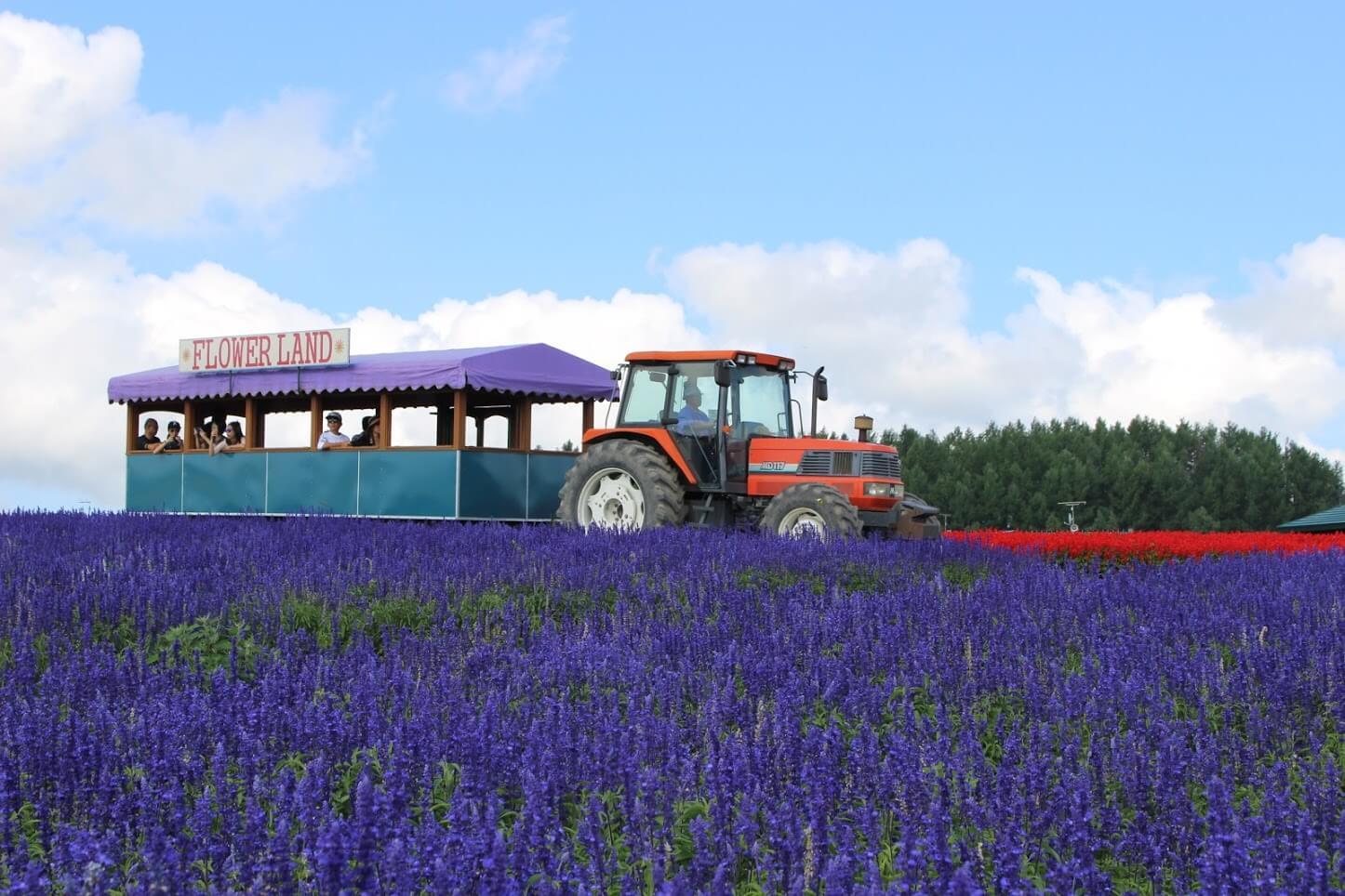 浪漫至極的紫色花海:Flower Land上富良野