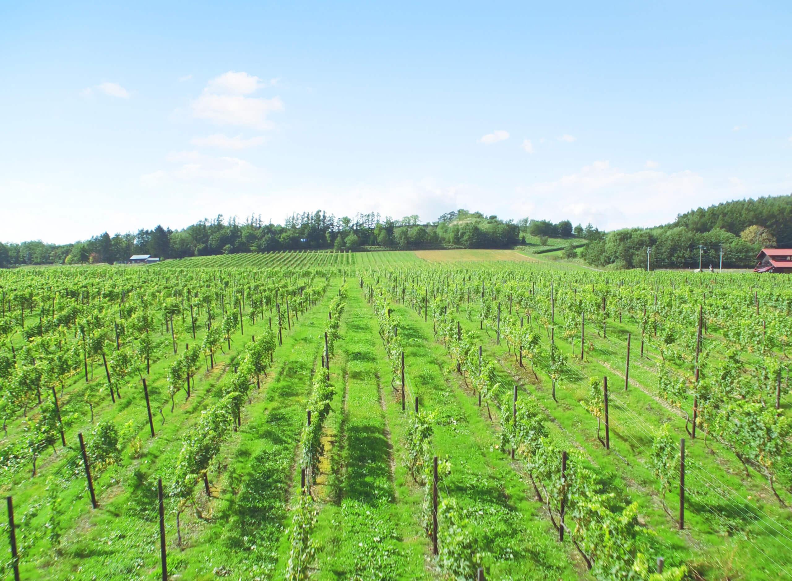 腹地廣大的葡萄酒莊:寶水釀酒廠
