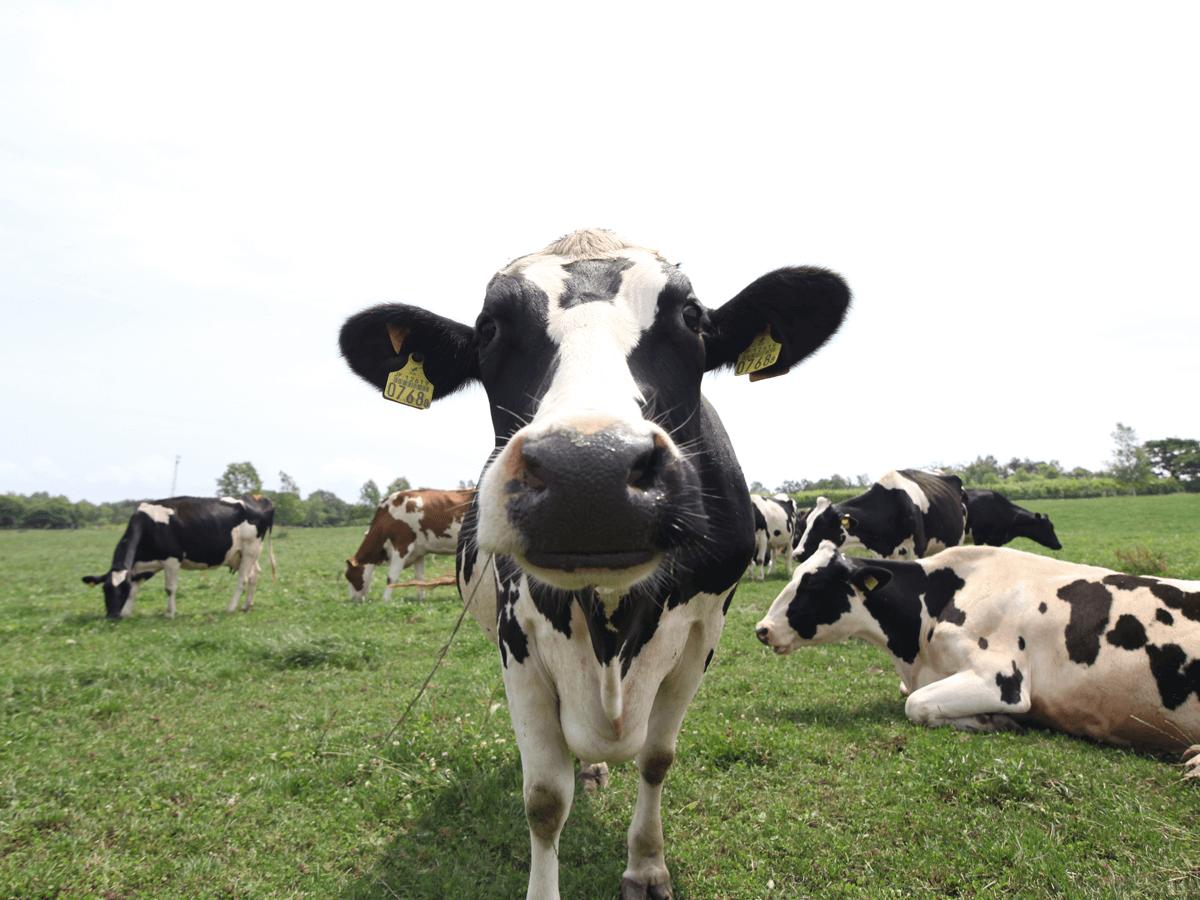 邊喝鮮奶邊看洞爺湖的絕佳熱點「Lake Hill農場」
