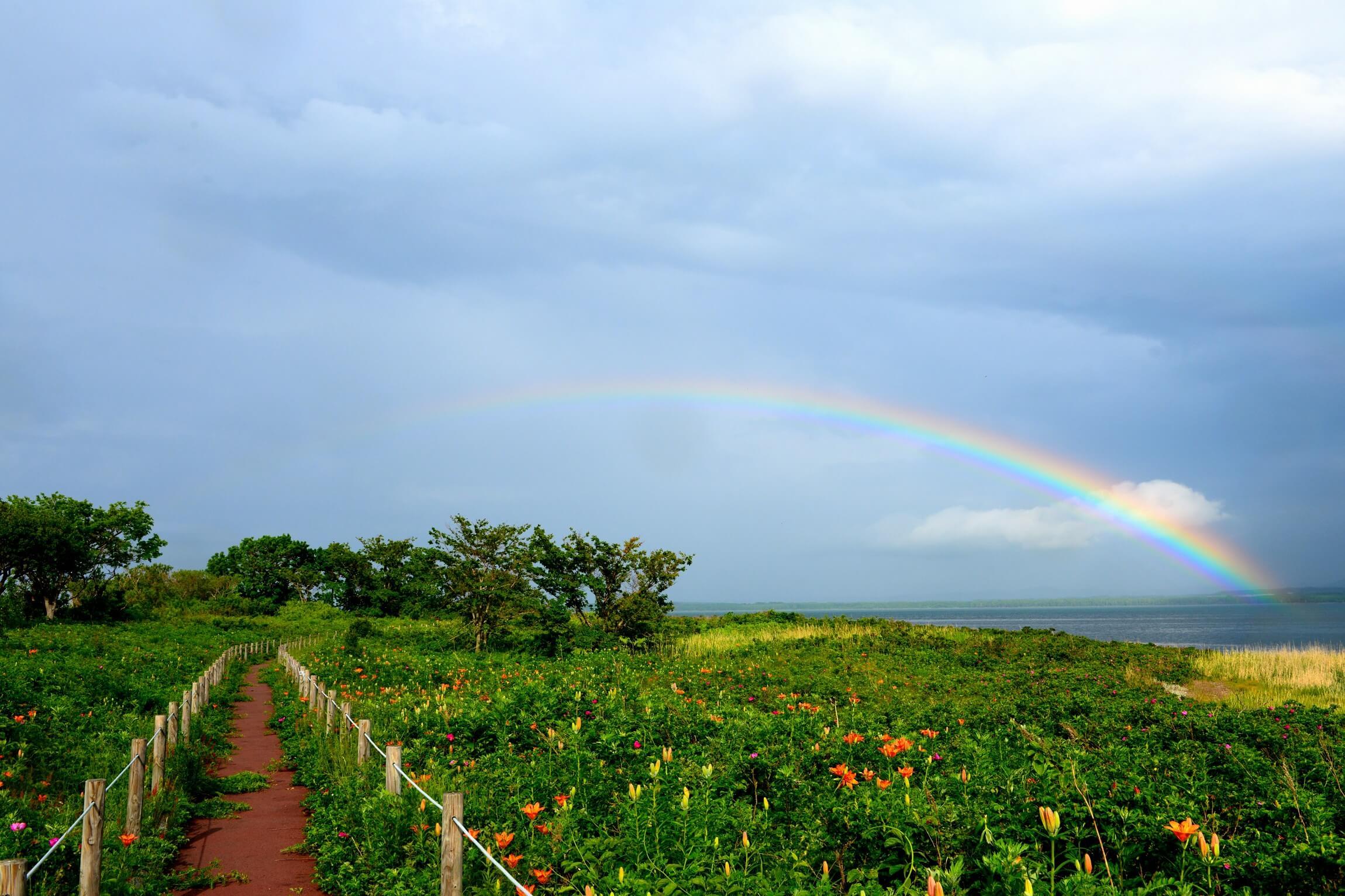 Wakka原生花園:日本最大規模的海岸草原
