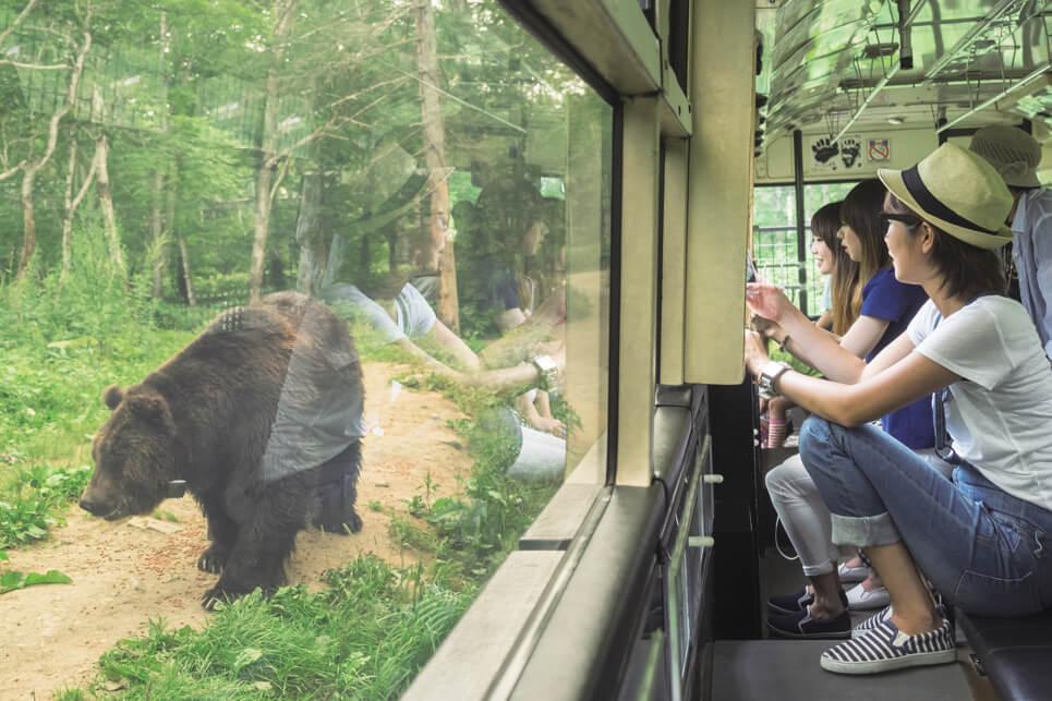 佐幌度假村 熊山公園:探索北海道動物生活