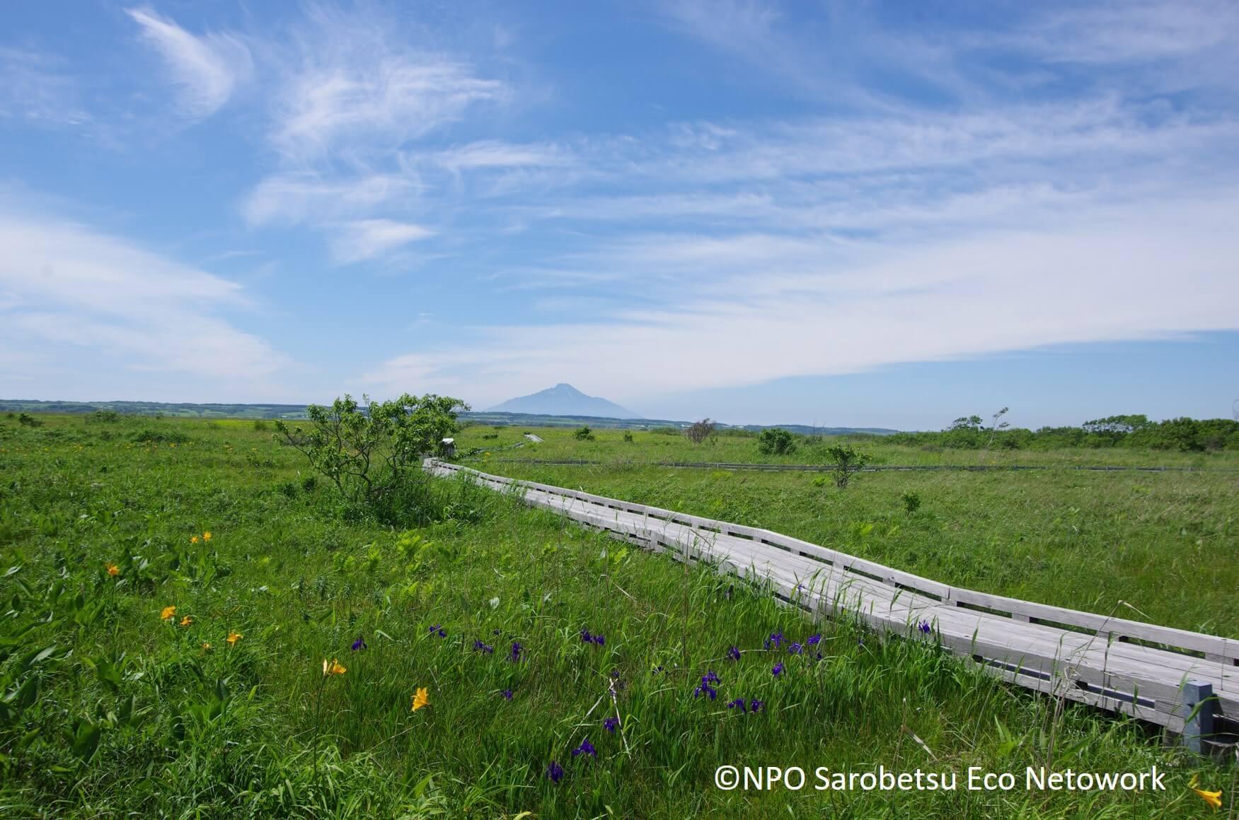 佐呂別濕原:候鳥棲息地的日本第三大濕原