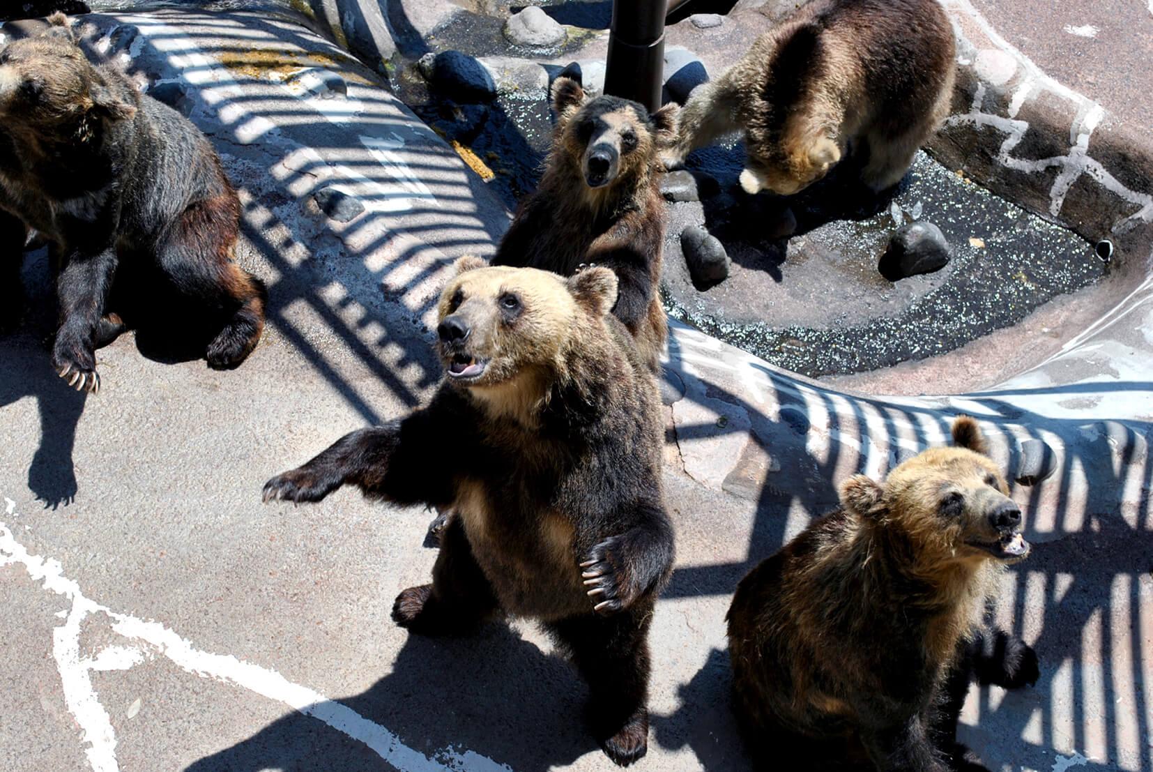 登別棕熊牧場:日本國內最大型的陸地動物園