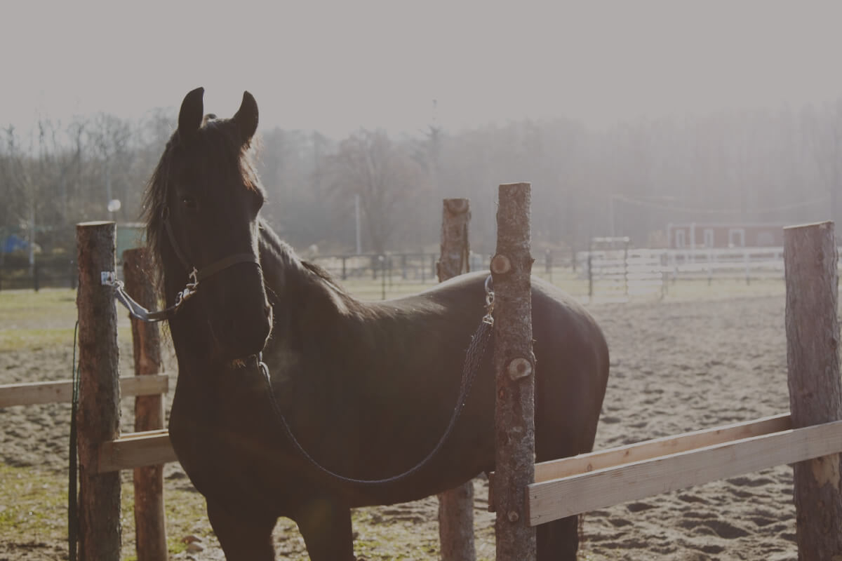 到大沼流山牧場 Paard Musée來場與馬兒的親密接觸