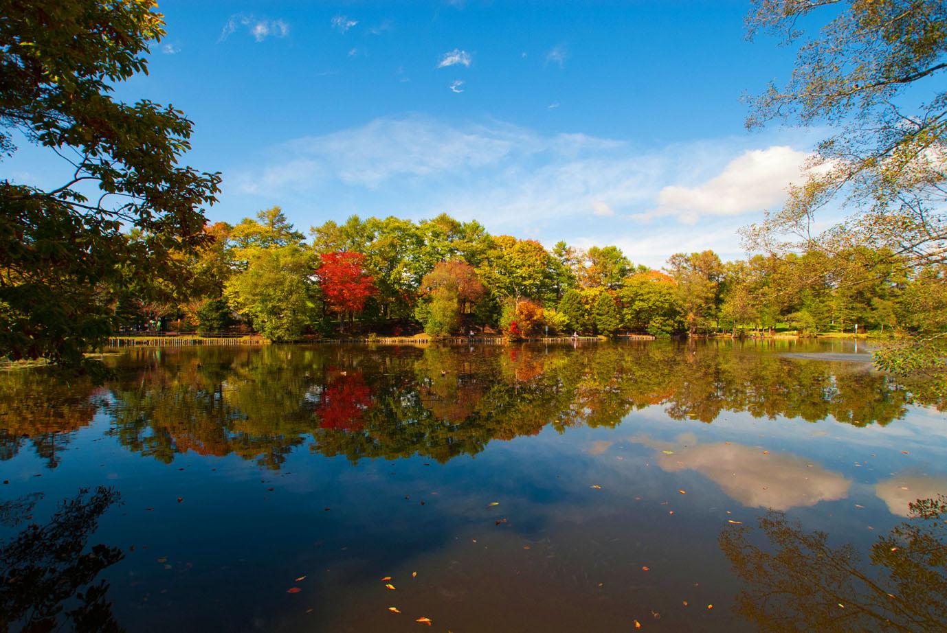 八郎沼公園:以櫻花為一年之始,可以欣賞百花與秋季楓紅的美麗公園