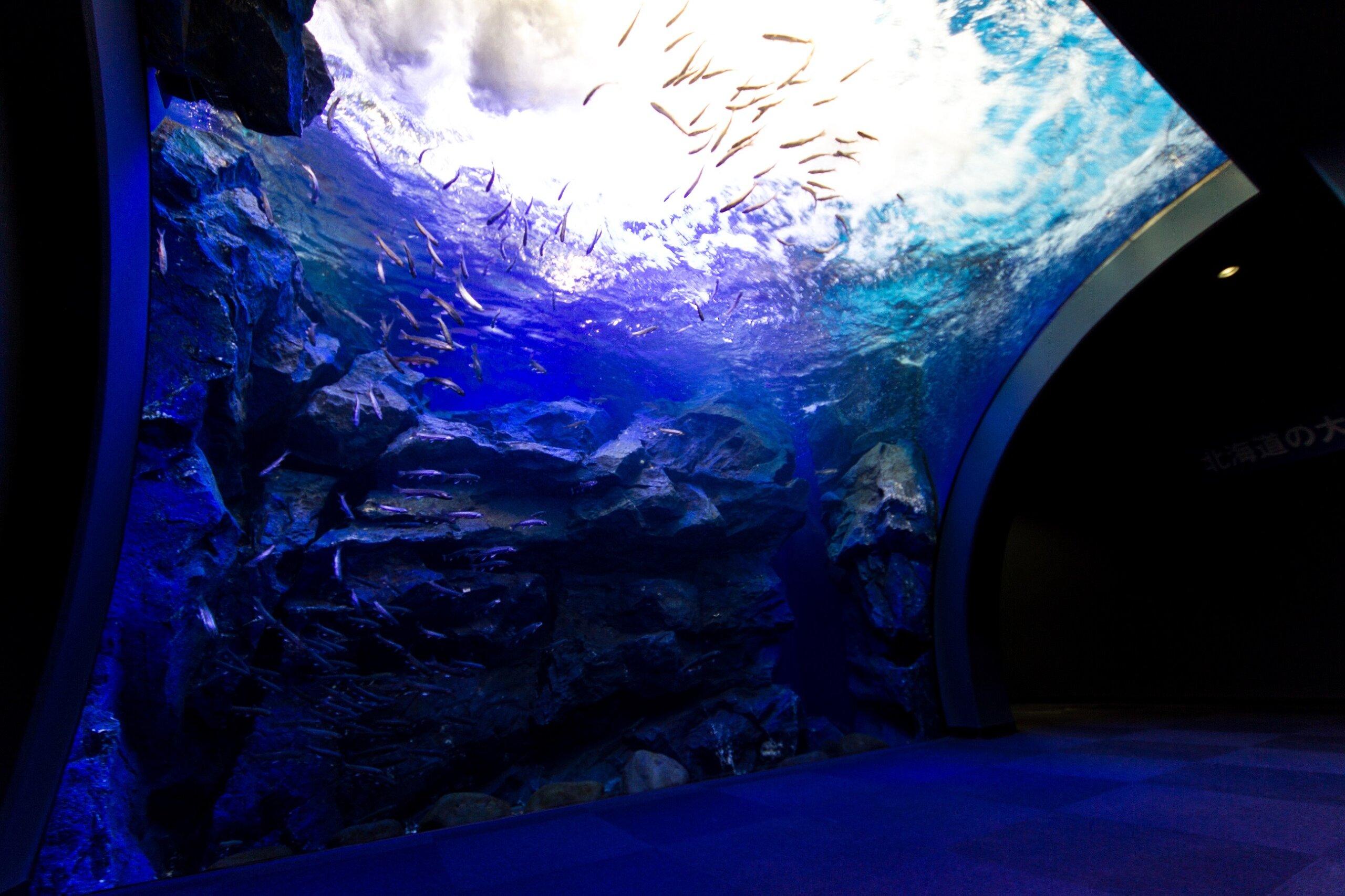 北國大地水族館:可以觀察到淡水魚的自然生態,感受海洋的無窮魅力!