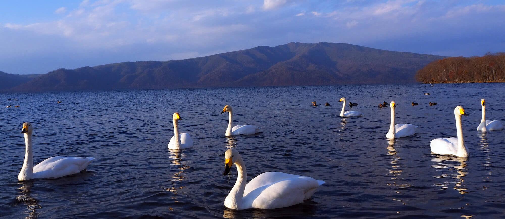 帶孩子們到釧路進行自然活動