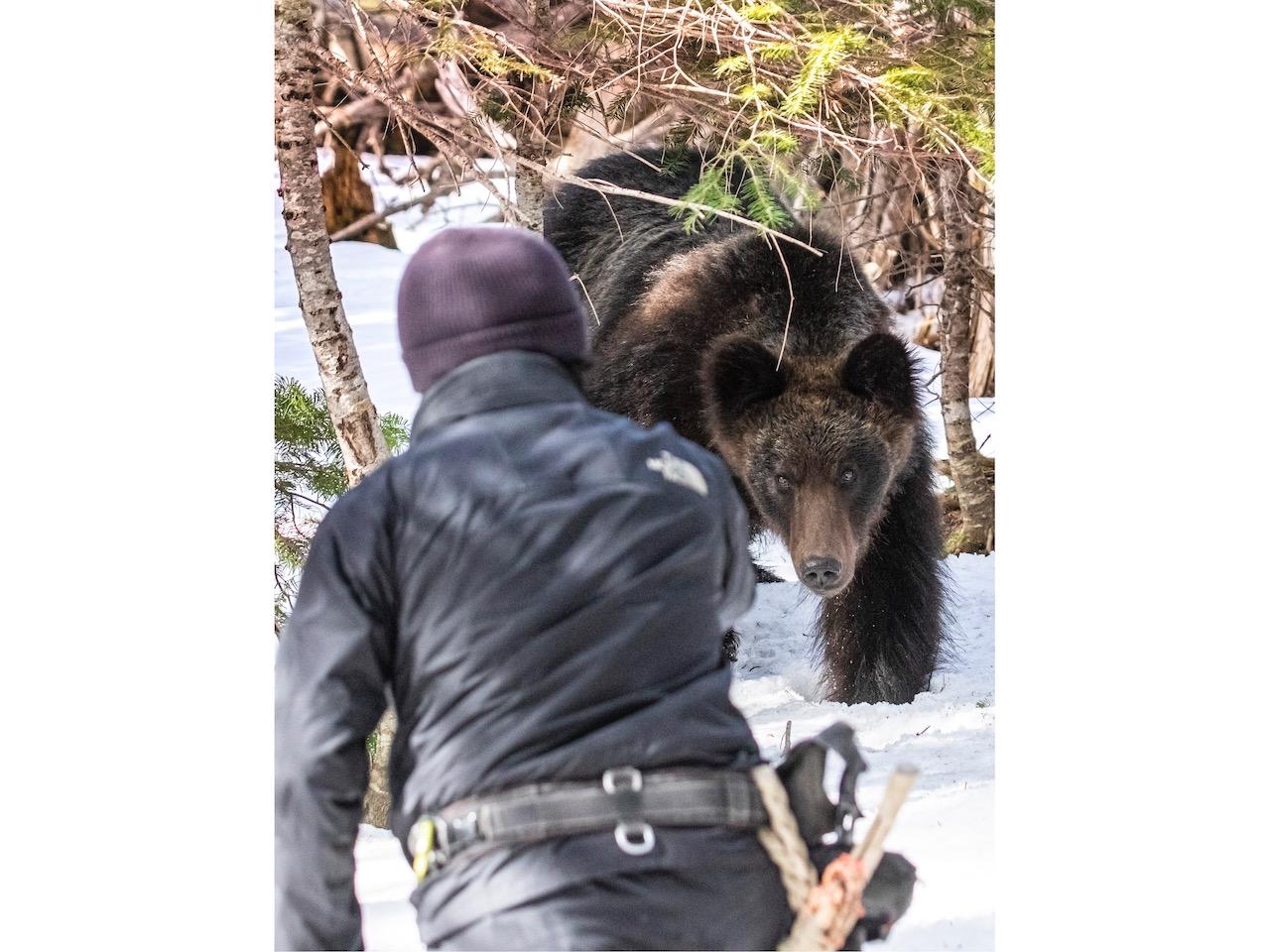 岸本先生與嚮導碰見的熊,正朝著他們2人直線前進。當岸本先生拍攝到這張照片時,與熊的距離僅有短短的4公尺。Ⓒ岸本日出雄